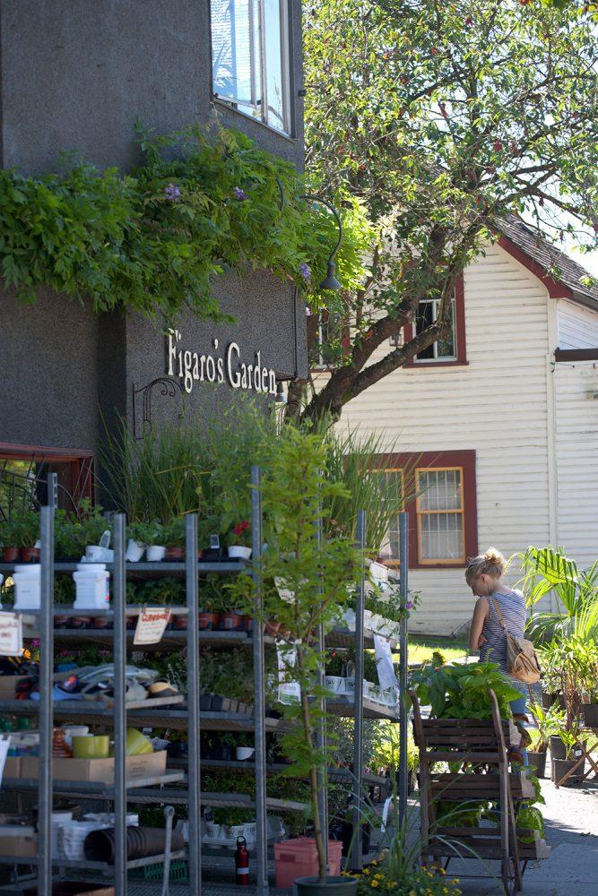 Figaro's Garden - Vancouver Grandview neighbourhood